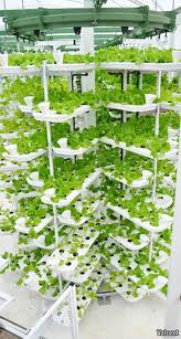 Vertical Farm Trays